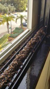 קן צרעות בחלון הבית