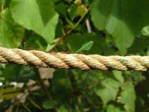 נמלים קטנות