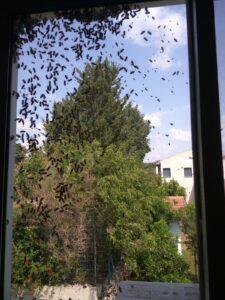 הרחקת דבורים מחלון של דירה